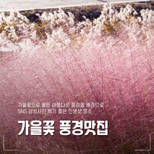 가을꽃 풍경맛집